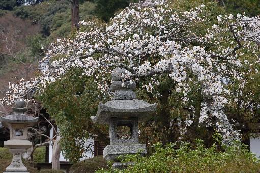 2010.4.3観心寺6