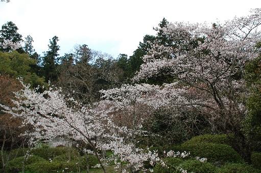 2010.4.3観心寺3