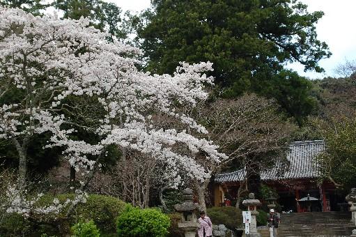 2010.4.3観心寺4