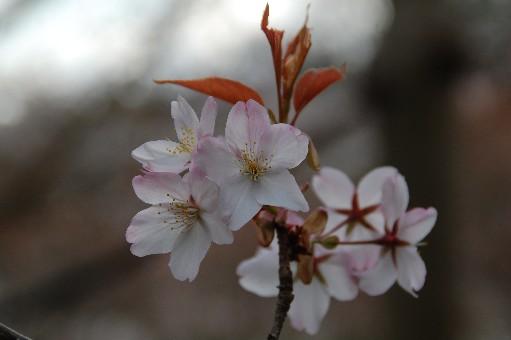 2010.4.3観心寺2