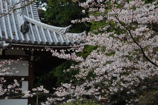 2010.4.3龍泉寺2