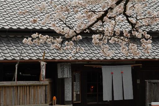 2010.4.3観心寺10
