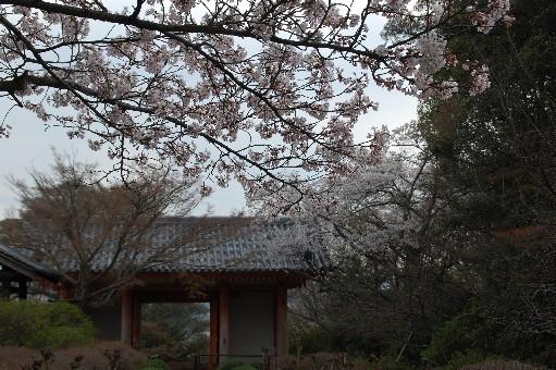 2010.4.3龍泉寺4
