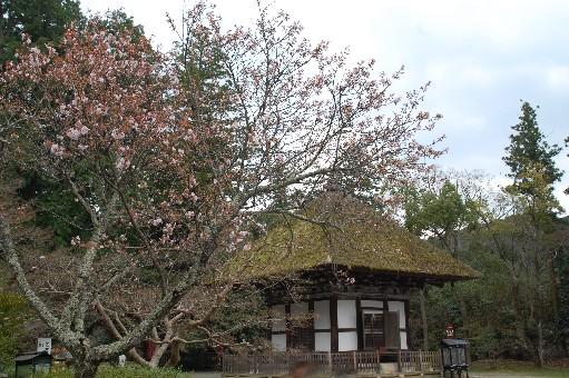 2010.4.3観心寺