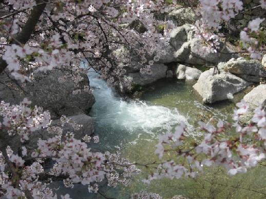 2010.4.4水間寺5