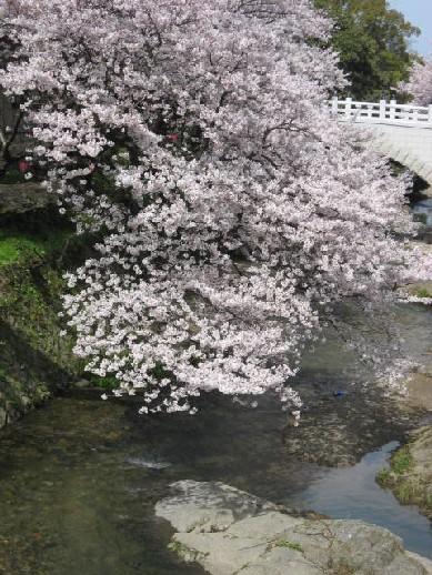 2010.4.4水間寺4