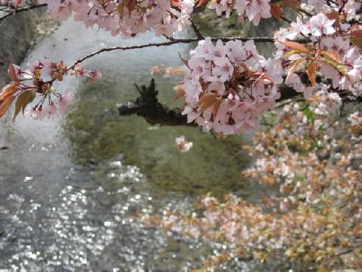 2010.4.4水間寺3