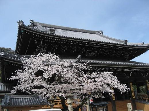 2010.4.4水間寺1