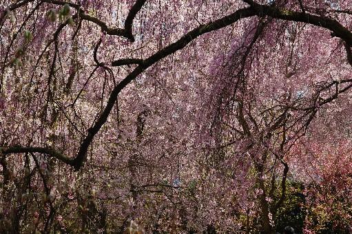 2010.4.17原谷苑6