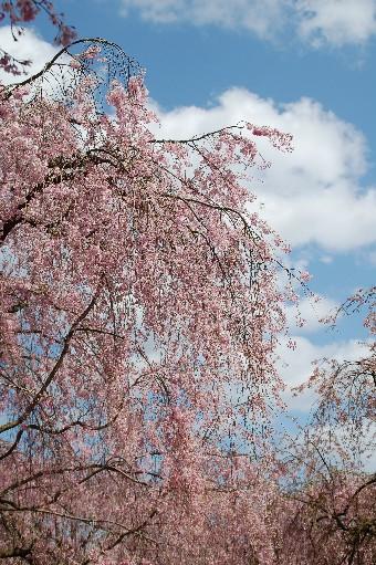 2010.4.17原谷苑2