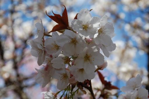 2010.4.17原谷苑13
