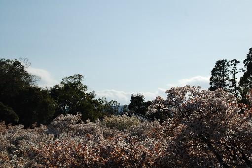 2010.4.17仁和寺8