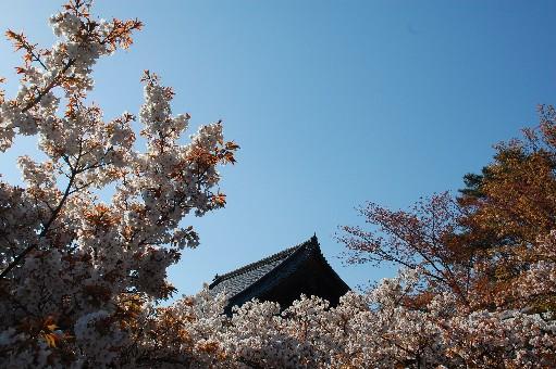 2010.4.17仁和寺5