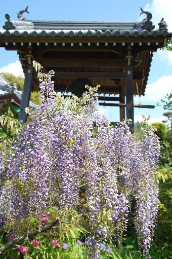 2010.4.29子安地蔵寺6