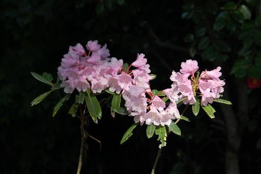 2010.4.29子安地蔵寺3