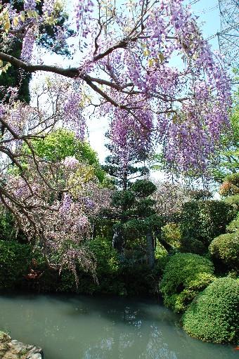 2010.4.29子安地蔵寺10