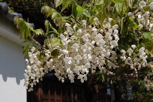 2010.4.29子安地蔵寺8