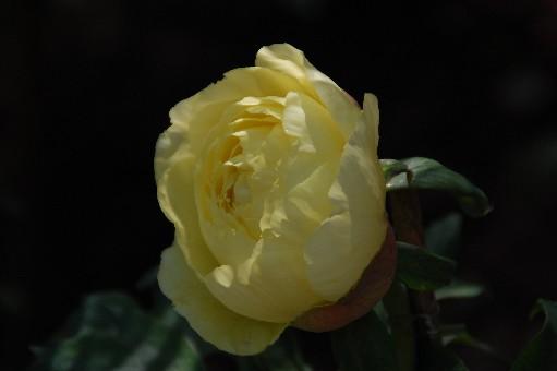 2010.4.29金剛寺16