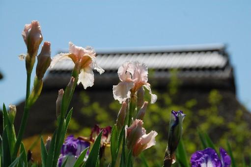2010.4.29金剛寺10