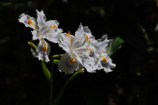 2010.4.29船宿寺11