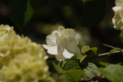 2010.4.29船宿寺8