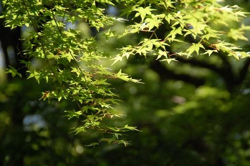 2010.5.22長谷寺3
