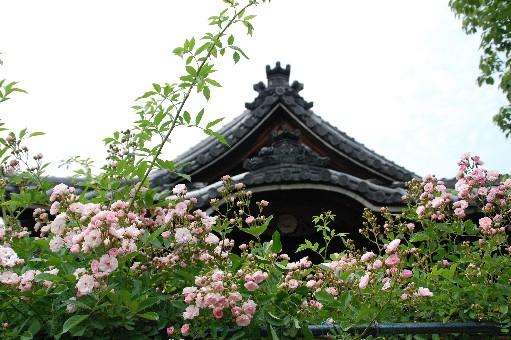 2010.5.22おふさ観音4