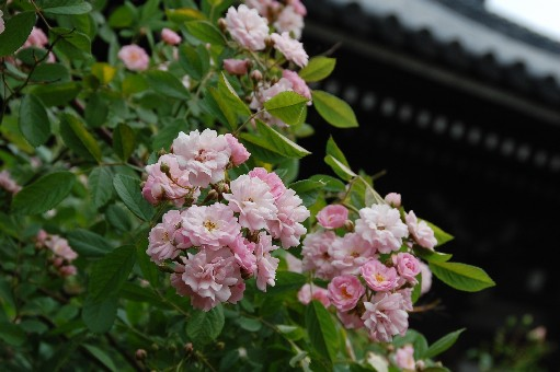 2010.5.22おふさ観音10