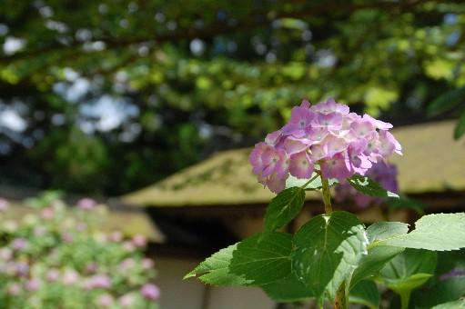2010.7.18金剛峯寺4