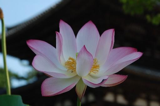 2010.7.25喜光寺17