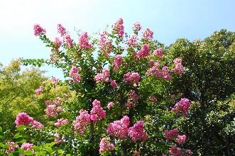 2010.7.25松伯美術館2