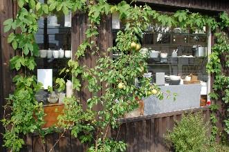 2010.7.25くるみの木10