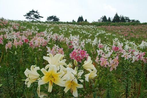 2010.7.31箱館山5