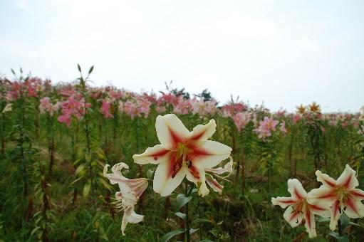 2010.7.31箱館山4