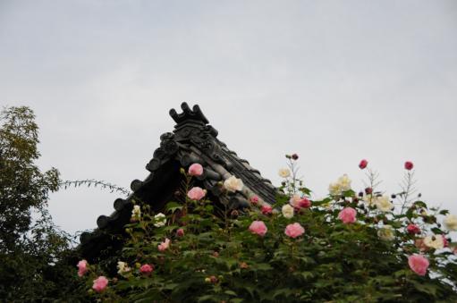 2010.10.23おふさ観音11