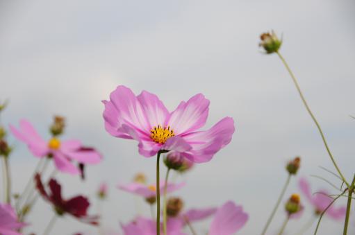 2010.10.23藤原京12