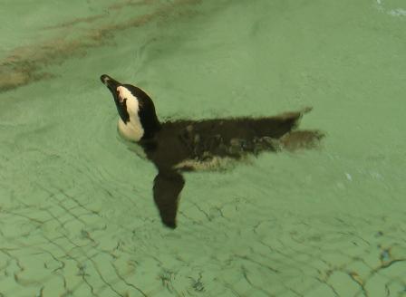 ペンギン2