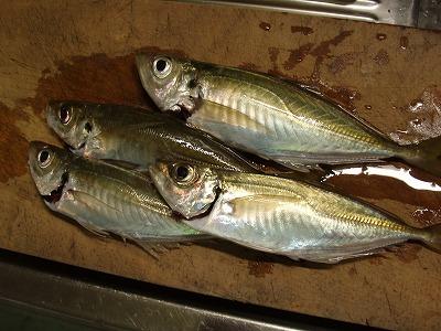 20091021アジ釣り2