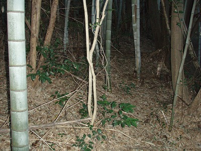 20091201勢子の健脚