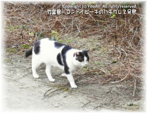 cat-taketomi-7.jpg