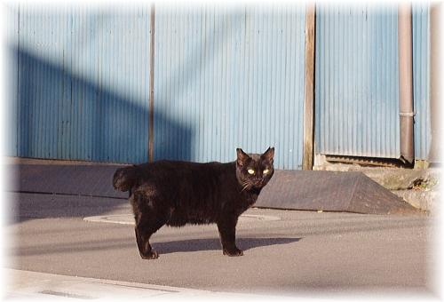 cat-yanaka-1.jpg
