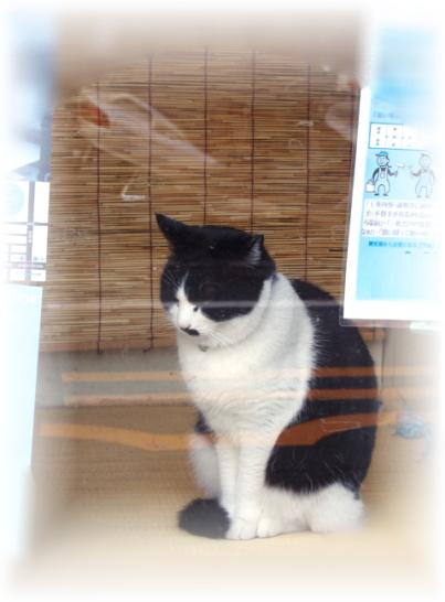 cat-yanaka-2.jpg