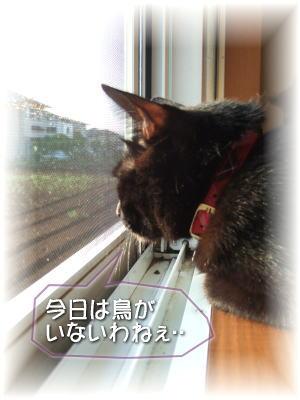 jiji29-0812-2.jpg