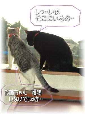 jiji29-0812-3.jpg