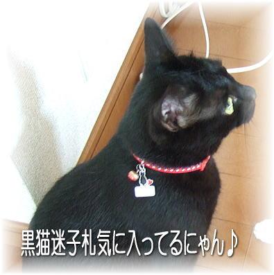 私のはもちろん黒猫よ!