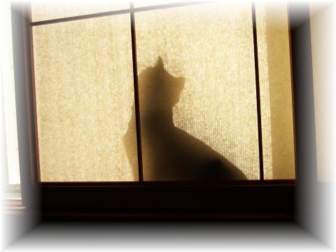 猫影絵です