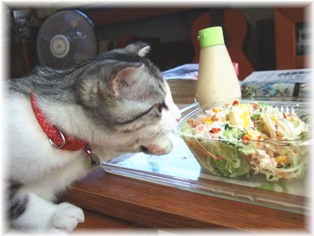このサラダ カニが入ってましゅね