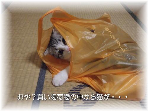スーパーで買われまちた・・