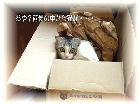猫急便で届きまちた