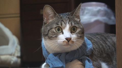 ブログ用 ハンカチ猫1
